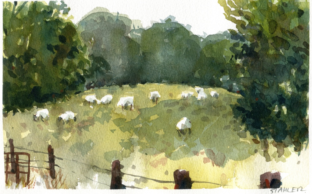grazingsheep